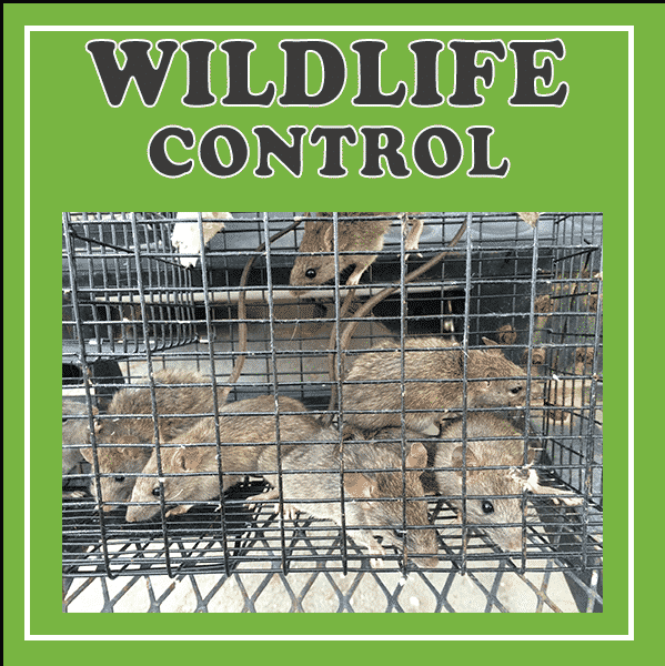 Wildlife Control - Wildlife Trapping