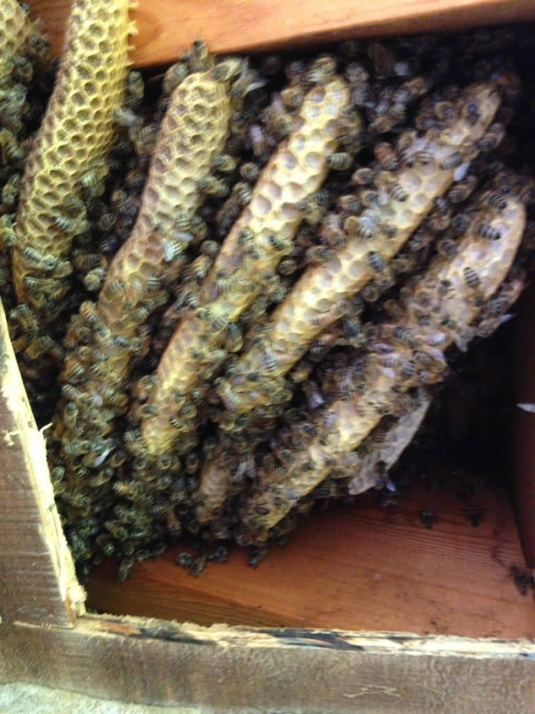 Dawsonville Bee Hive Removal
