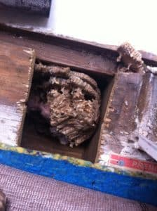 Hornet Nest Cut-Out