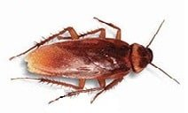 Roach Extermination _ Roach Control