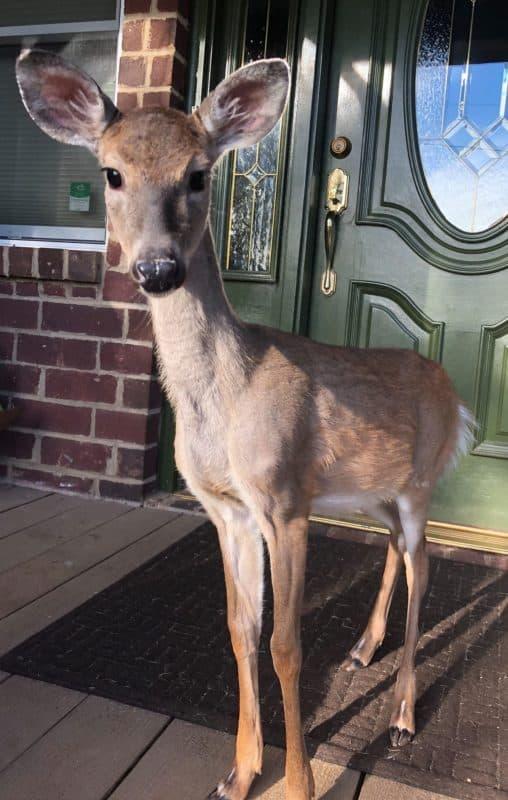 deer rehab