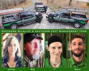southern wildlife team