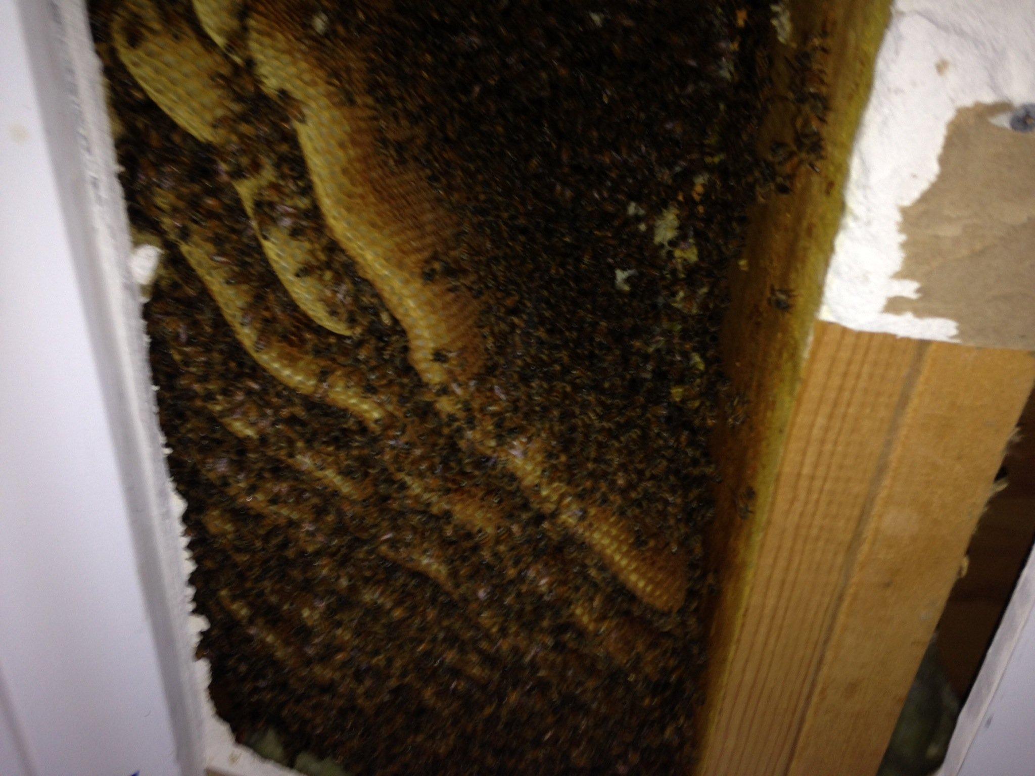 Economical Hive Cut-Out Services